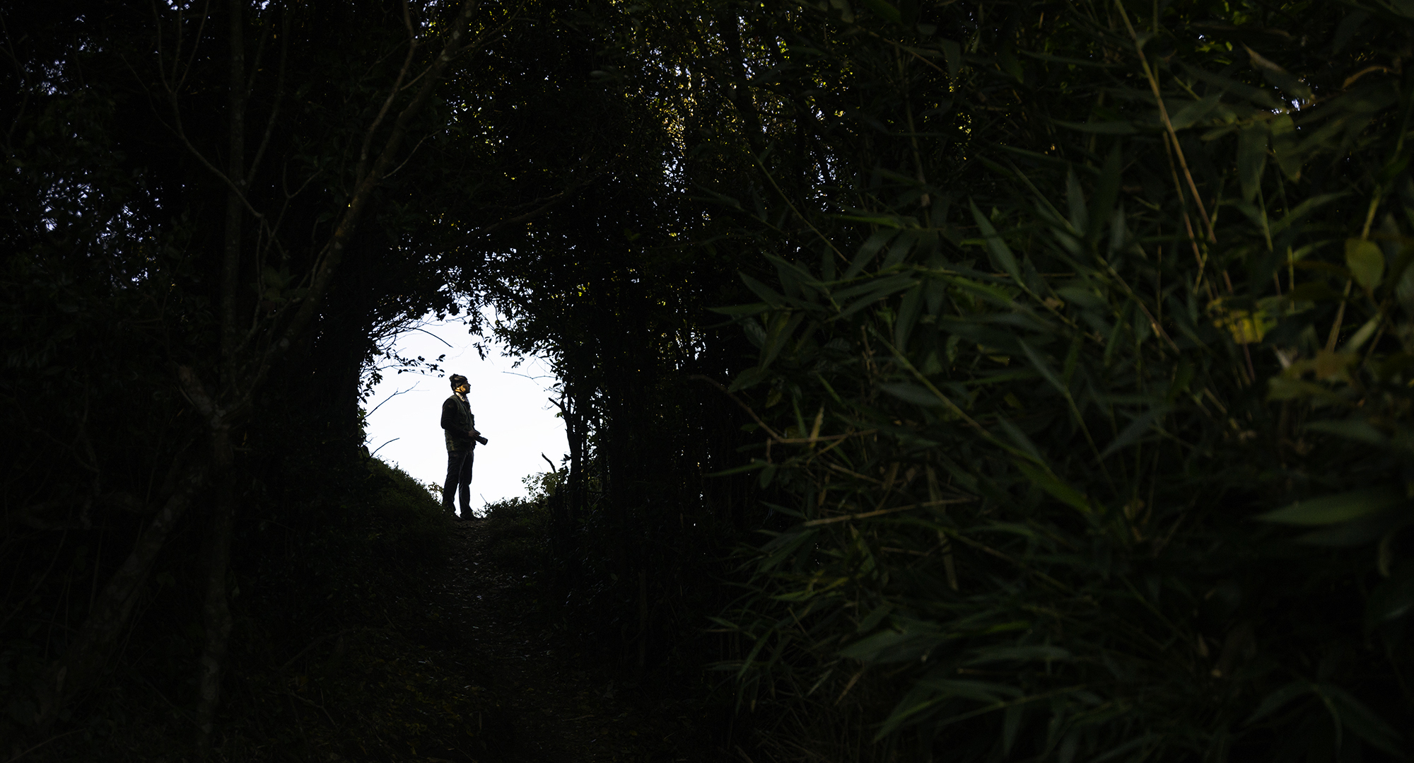 Framed inside the forest, frame inside a frame