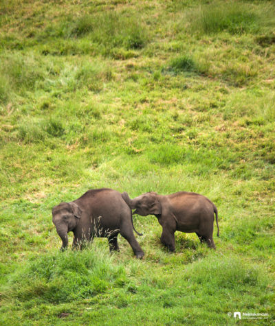 The playful young ones, Munnar, Kerala.