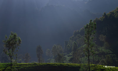 Munnar Backlight
