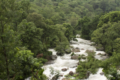 The Pambar river flowing through the forests of munnar. It's a monsoon season and the river is in its full strength.