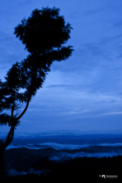 After the rains, after the sunset, when the beautiful Munnar turned blue. It was magical, nostalgic.
