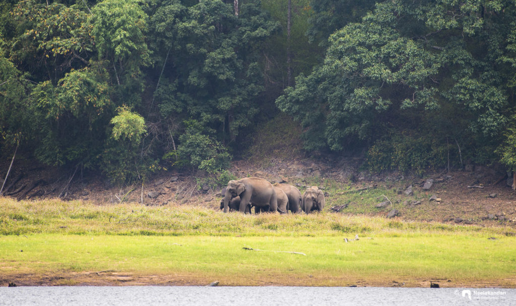 Elephant heard at Periyar Tiger Reserve